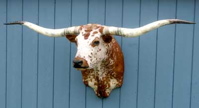 Decor Longhorns Head To Tail Store
