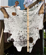 Speckled Roan Texas Longhorn Hide Rug U_3184_s