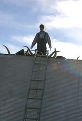 Man On Roof with Raw Texas Longhorn Skulls - r_4273