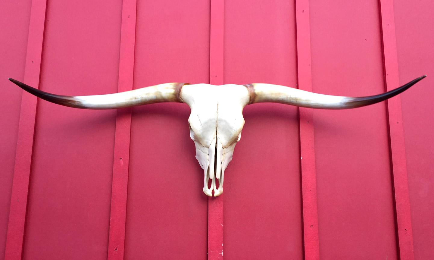 Sneaky Pete - Steer Skull #1691
