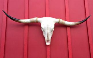 El Sweet - Steer Skull #1694