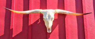 Chuck - TL Steer Skull #4161