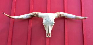 Hoosgow – TL Bull Skull #4166