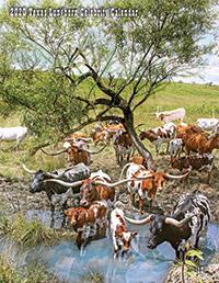 2020 Texas Longhorn Celebrity Calendar - Cover