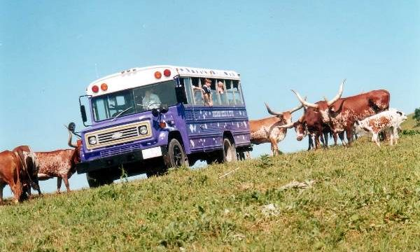 Tour Bus With Watusi