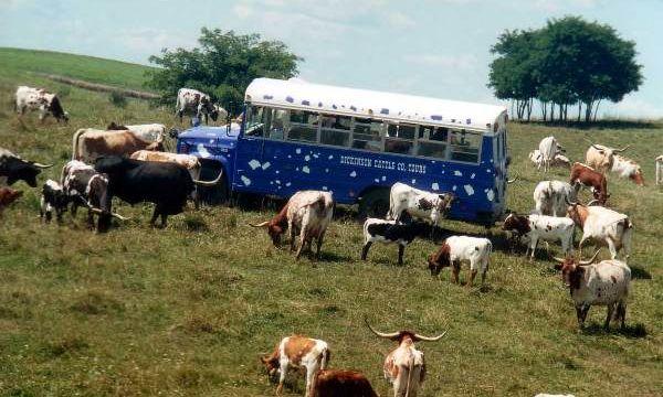 Longhorn Bus on Appalachian Hillsides