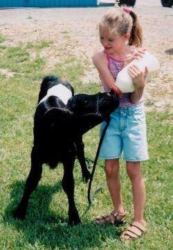 Nichole With Buelingo Calf